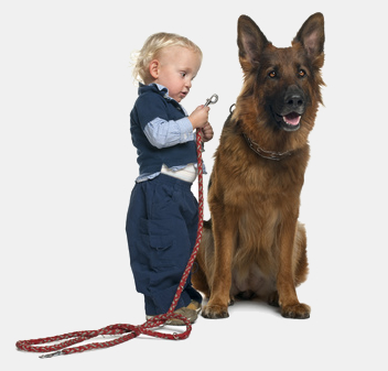 Adiestramiento de perros Alicante
